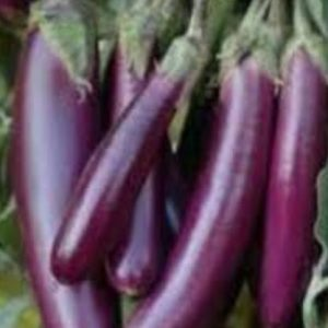 Eggplant Seeds UK, Aubergine Seeds UK, Brinjal Seeds UK